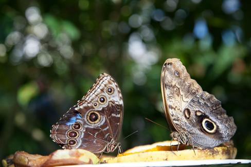 keywest-butterfly2